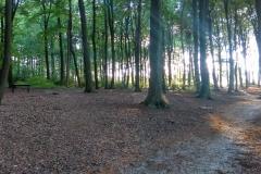 """""""Im Grünen"""" in einem Wald in Arnhem."""