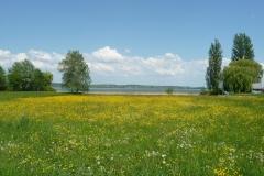 Ausblick am Untersee (Bodensee).