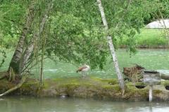 Vogel am Canal de Huningue.