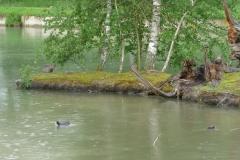 Links im Bild geniesst gerade ein Otter die frische Luft...