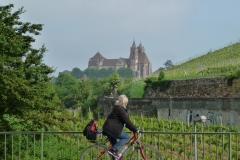 Blick hinauf zum Münster von Breisach.