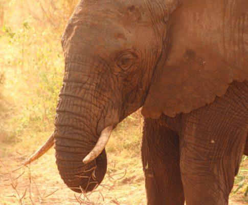 Tansania – Mto wa Mbu und Lake Manyara