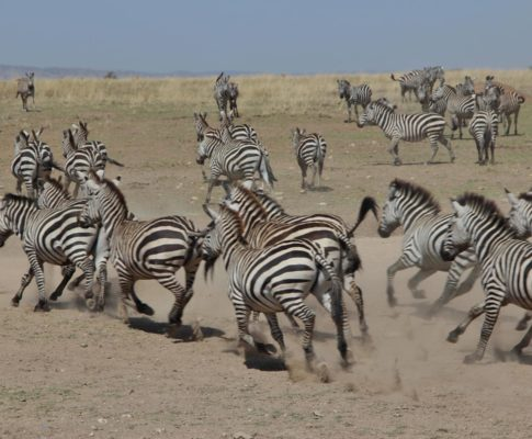 Tansania – Game Drives in der Serengeti